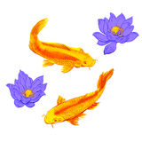Illustration with fish and lotus flowers. Goldfish and lotus flowers on white.  Raster illustration. Hand painted Royalty Free Stock Image