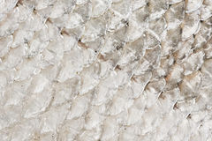 Illustration of fish skin background Stock Photos