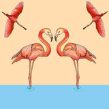 Illustration of Flamingos in flight and water. Vector Illustration of love pink Flamingos in flight and water. Hand draw Royalty Free Stock Photo