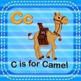 Flashcard letter C is for camel Royalty Free Stock Image