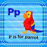 Flashcard letter P is for parrot. Illustration of Flashcard letter P is for parrot stock illustration