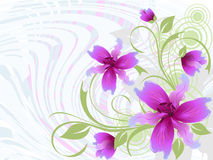 Illustration of a floral background Stock Photos