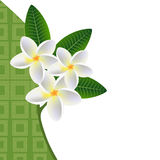 Illustration of a floral background with a sprig of plumeria frangipani Plumeria with leaves. Royalty Free Stock Image