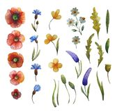 Illustration florale d'aquarelle illustration libre de droits