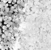 Illustration florale noire et blanche de background Photographie stock