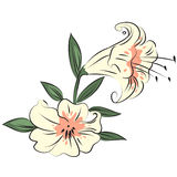 Illustration Flower. On white background Stock Images