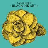 Illustration with flower Camellia drawn by hand with black ink Royalty Free Stock Photography