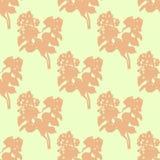 Illustration of flower, jasmine. Seamless pattern. Stock Photos
