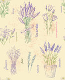 Illustration of flower Stock Photography