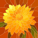 Illustration of flower yellow chrysanthemum. Stock Photos