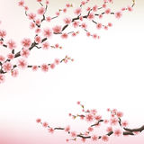 Illustration of flowering branch of Sakura. EPS 10 Royalty Free Stock Photos