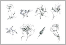 Illustration flowers. Royalty Free Stock Photo