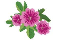 Illustration of flowers malva - vector Royalty Free Stock Photos