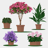 Illustration of flowers in pot. Royalty Free Stock Photos