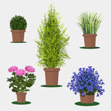 Illustration of flowers in pot. Royalty Free Stock Image