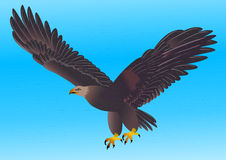 Illustration flying strong eagle Royalty Free Stock Photography