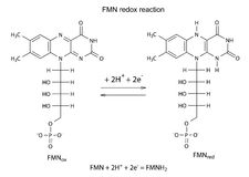 Illustration of FMN redox reaction Royalty Free Stock Image
