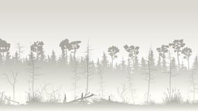 Illustration of forest with grass swamp and deadwood. Horizontal illustration misty coniferous forest with grass on edge of swamp Stock Images