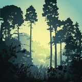 Illustration forest in the morning Stock Photos