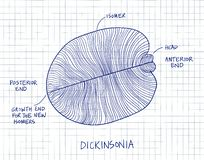 Illustration fossile de croquis de Dickinsonia Dessin de paléontologie Illustration Libre de Droits