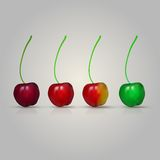 Illustration of four cherries Royalty Free Stock Photos