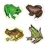An Illustration Four Different Type of Frogs Stock Images