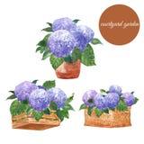 Illustration française romantique de jardin avec des fleurs d'hortensia dans des pots, le panier et des planteurs de cru Ensemble image libre de droits