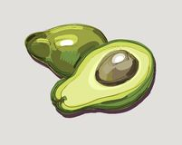 Illustration of Fresh Avocado Stock Images