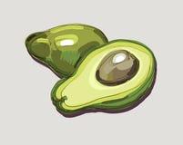 Illustration of Fresh Avocado Stock Images
