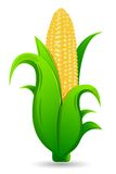 Fresh Corn. Illustration of fresh corn with leaf on  white background Stock Images