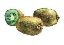 Illustration of fresh fruit whole and slice kiwis. royalty free illustration