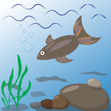 Illustration of freshwater fish in the underwater habitat. Undersea world. River or lake. Aquatic plants, fish. Vector illustration Royalty Free Stock Photography