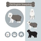 Old English Sheepdog Dog Breed Infographic. Illustration, Front and Side View, Icon Stock Photos