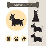 Scottish Terrier Dog Breed Infographic. Illustration, Front and Side View, Icon Royalty Free Stock Images