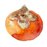 Illustration of fruit persimmon. Hand drawn watercolor on white background. Stock Images