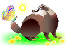 Illustration of funny badger  looking at butterfly. Royalty Free Stock Photos