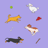 Illustration of funny dogs running to their items. Illustration of funny dogs chasing their items Stock Photo