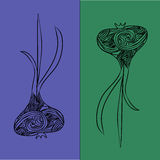 Illustration of garlic Stock Image
