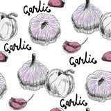 Illustration with garlics Royalty Free Stock Photography