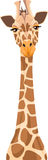 Illustration Of A Giraffe Stock Images