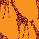 Illustration of a giraffe. seamless animal pattern Royalty Free Stock Images