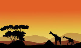 Illustration of the giraffes on the hills Royalty Free Stock Photography