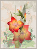 Illustration gladiolus and dragon Stock Images