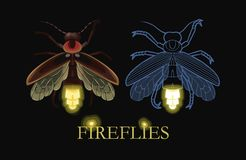 Illustration of glowing firefly. Vector illustration of glowing firefly and firefly silhouette Stock Image