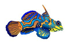 Illustration of a golden mandarin fish royalty free illustration