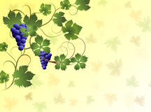 Illustration of grapes on a yellow background. Grape vine background with texture Royalty Free Stock Photos