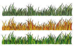 Illustration of grass in 3 different colors. Vector illustration of grass in 3 different colors stock illustration