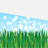 Illustration of grass Royalty Free Stock Photography