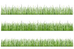 Illustration of grass, stylized grass, vector. Illustration of grass, stylized grass grass drawn in the vector. Three different grass pictures of various lengths Royalty Free Stock Image