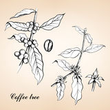 Illustration gravée par vintage de café Image stock